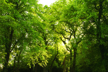 Beautiful green trees in a forest, sunlight coming through the l