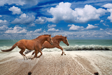Horses running along seashore