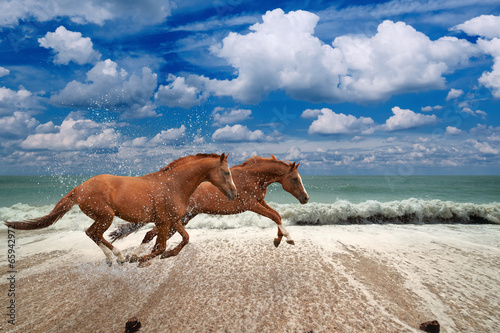 Fototapeta Horses running along seashore