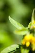 canvas print picture - Gelbe Blumen