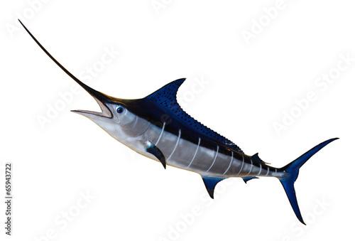 Blauer Marlin - 65943722