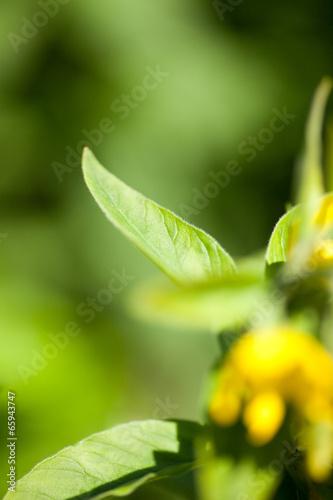 canvas print picture Gelbe Blumen