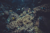 small coral reef ecosystem poster