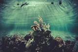 sponge, small coral reef ecosystem poster