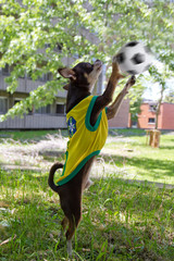 Dog is playing soccer in park.