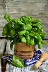 Basil in wooden mortar.