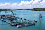 Cage aquaculture farming, Thailand poster