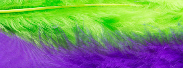 Green and purple feather background, close up