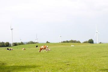 Windmühlen 4