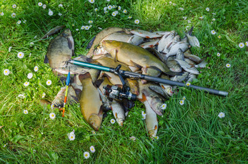 fish catch pile on grass with rod and float