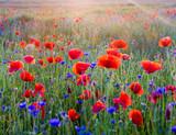 Polne maki pośród traw i kwiatów polnych © Mike Mareen