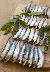 Fresh sardines, mackerel fishes before BBQ grill