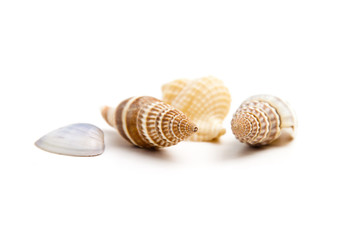 Shells of marine crustaceans on a white background