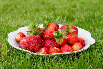 strawberry on plate on green grass
