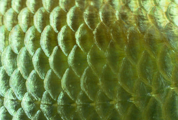 Background golden fish scales