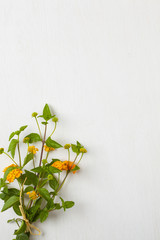 A bunch of flowers on a white wooden background
