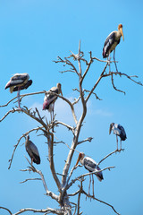 many pelican on tree