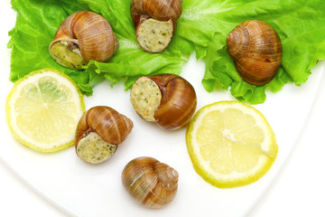 snails in butter sauce Parmesan, lemon and lettuce on a plate on
