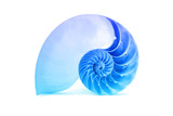 Nautilus shell and famous fibonacci blue geometric pattern