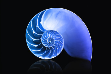 nautilus shell mathematical spiral with blue overlay duotone