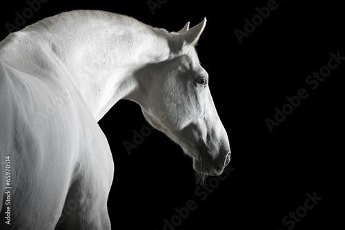white horse isolated on black - 65970514