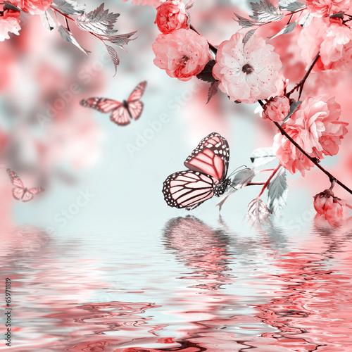 Plexiglas Kersen Pink flower of an Oriental cherry in and butterfly
