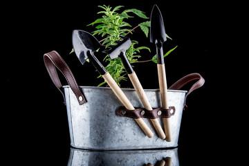 Cannabis on a black background