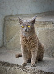Portrait of alien cat with yellow eyes