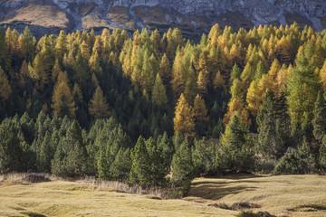 Bosco di coniere in autunno