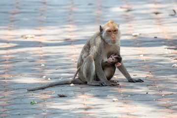 Affenbaby mit Mutter