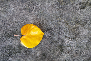 one yellow leaf on grey stone texture