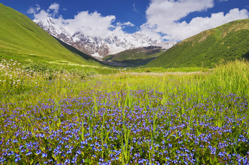 Mountain valley with blue flowers