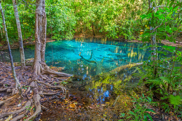 Emerald Pool is unseen pool in mangrove forest at Krabi