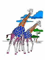 giraffe nella savana su sfondo bianco
