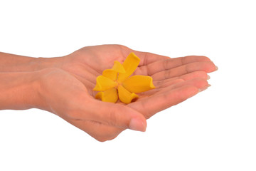Ylang-Ylang Flower in a woman hand