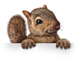 fototapeta słodkie wiewiórki