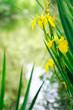 Leinwanddruck Bild - Yellow Wildflowers Near River