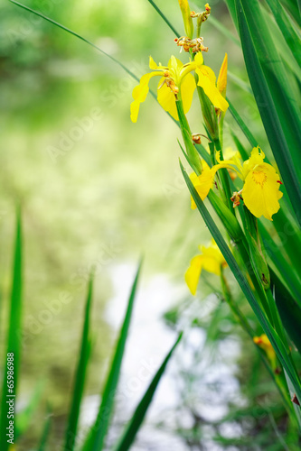 Leinwanddruck Bild Yellow Wildflowers Near River