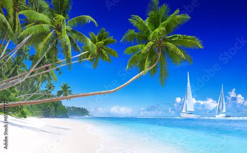 Sailboats on beach and palm tree