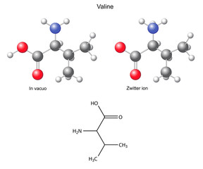 Valine (Val) - chemical structural formula and models