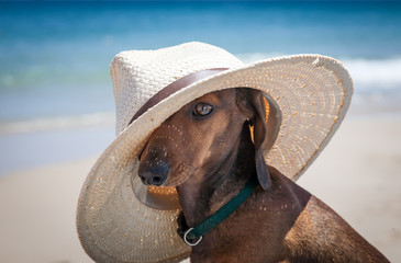 Dog with hat on the beach