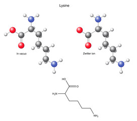 Lysine (Lys) - chemical structural formula and models