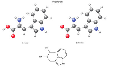 Tryptophan (Trp) - chemical structural formula and models