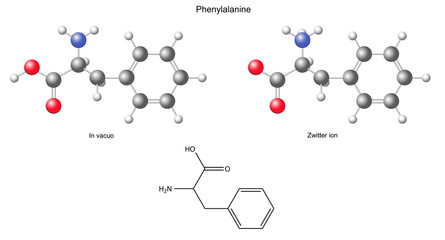Phenylalanine (Phe) - chemical structural formula and models