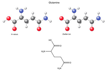 Glutamine (Gln) - chemical structural formula and models