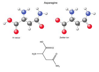 Asparagine (Asn) - chemical structural formula and models