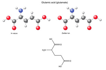 Glutamic acid (Glu) - chemical structural formula and models