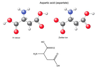 Aspartic acid (Asp) - chemical structural formula and models