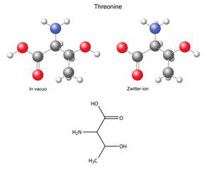 Threonine (Thr) - chemical structural formula and models