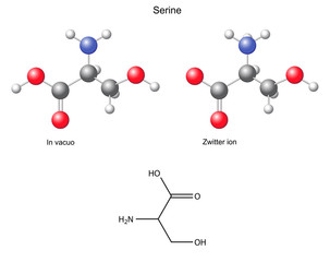 Serine (Ser) - chemical structural formula and models